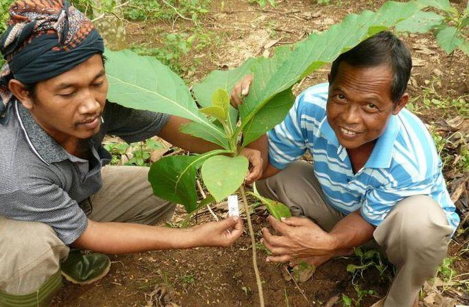 Wiederaufforstung in Indonesien