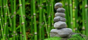 bambus wald nachhaltig boom holzuhr
